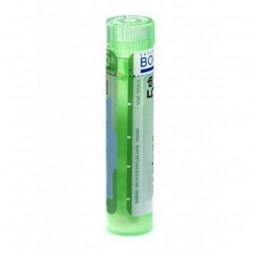 Boiron Arsenicum Album Grânulos 5CH - 1 tubo - comprar Boiron Arsenicum Album Grânulos 5CH - 1 tubo online - Farmácia Barreir...